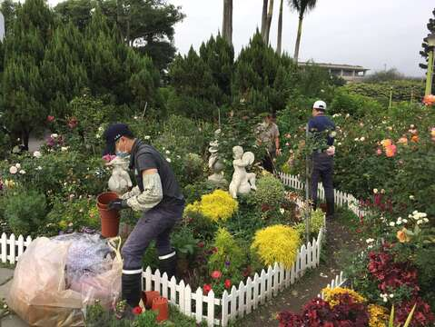 Football Chrysanthemum Displayed at Taipei Rose Garden