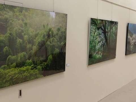 五感創作認識地球 北市典藏植物園推環教藝術展