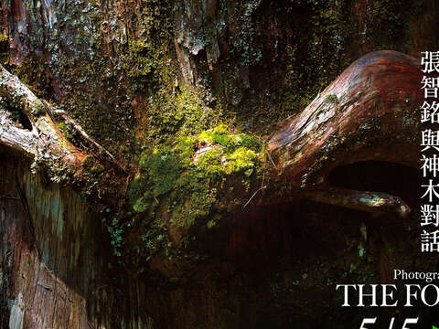 THE FORMATION │ The Dialogues with the Divine Trees Photography Exhibition by Michael, Chang Chih-Ming